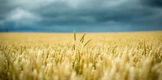 Antworten auf den steigenden Ertragsdruck in der Ernährungsindustrie