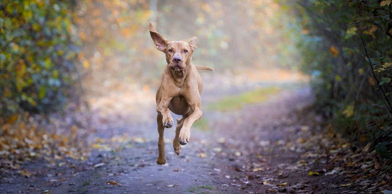 Der Ebner Stolz China Desk wünscht alles Gute zum Jahr des Hundes!