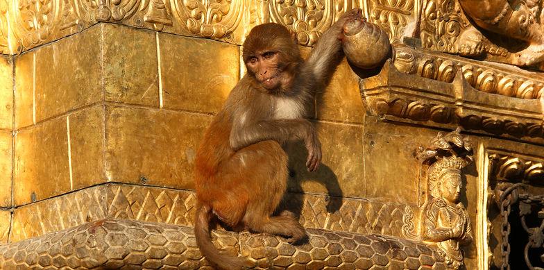 Ebner Stolz China Desk - Alles Gute zum Jahr des Affen!