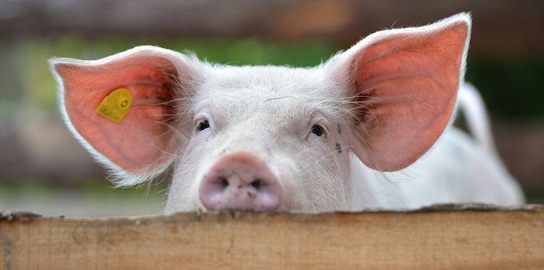 Frischelogistik – Expertenbeitrag in der Fleischwirtschaft