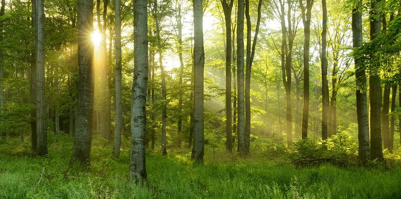 Gemeinsame Studie mit Stakeholder Reporting zur Nachhaltigkeitsberichterstattung