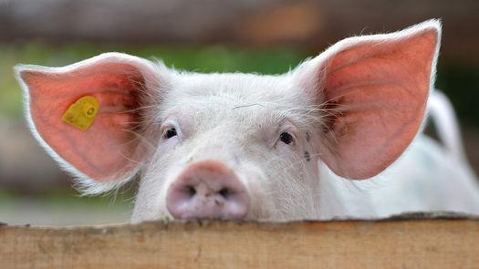 Let's talk meat: Die Fleischwirtschaft im Gespräch
